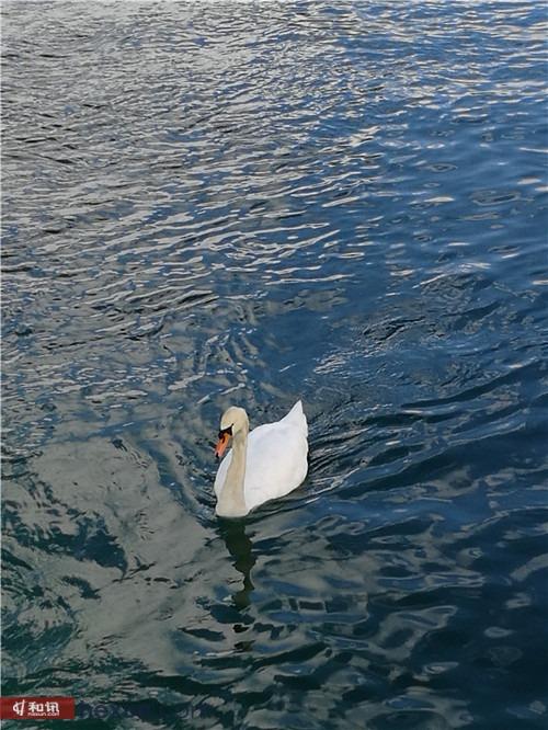 欧洲之初体验:莱茵河上的浪漫游轮之旅