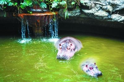 """在北京动物园里,怕冷的动物们泡""""热水澡"""",烤""""暖气"""",躺""""棉垫""""……早就"""