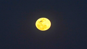 """""""超级月亮""""现身天宇"""