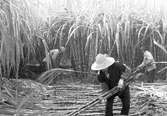 浅析产业荟萃度对吾国糖企的影响
