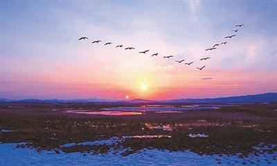 """鸟类迁徙季,读懂它们的""""空中阵形"""""""