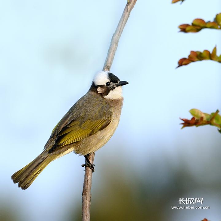 【河北惠民书市】《家住白洋淀·我的观鸟笔记》:一本书带你爱上小鸟