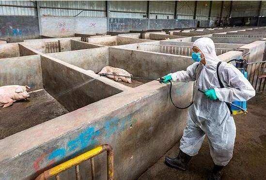 非洲猪瘟疫情仍在持续 时迈科技研发成果广泛用于无害化处理