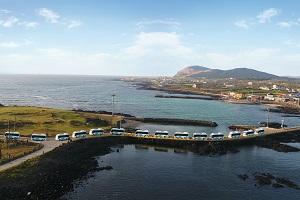 三月-济州岛的黄色花海里,看碧海蓝天,听浪涛击岸