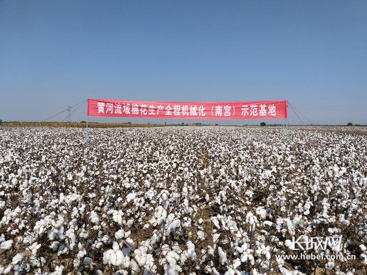 """【他们,在希望的田野上】系列报道⑨棉花专家马峙英:把自己""""种""""在棉田里"""