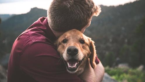 靠养猫养狗年入百万:宠物博主是门怎样的生意?