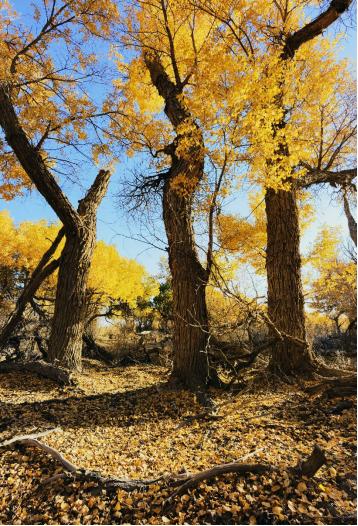 一颗树,如何影响我们的生活?
