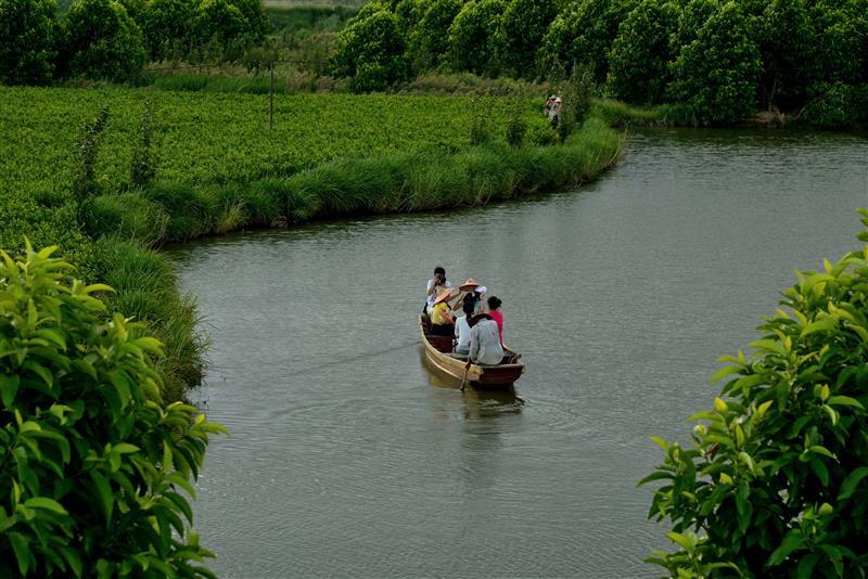 茉莉满城茶飘香——福建福州市大力大举放荡传承和发扬茉莉花和茶文化