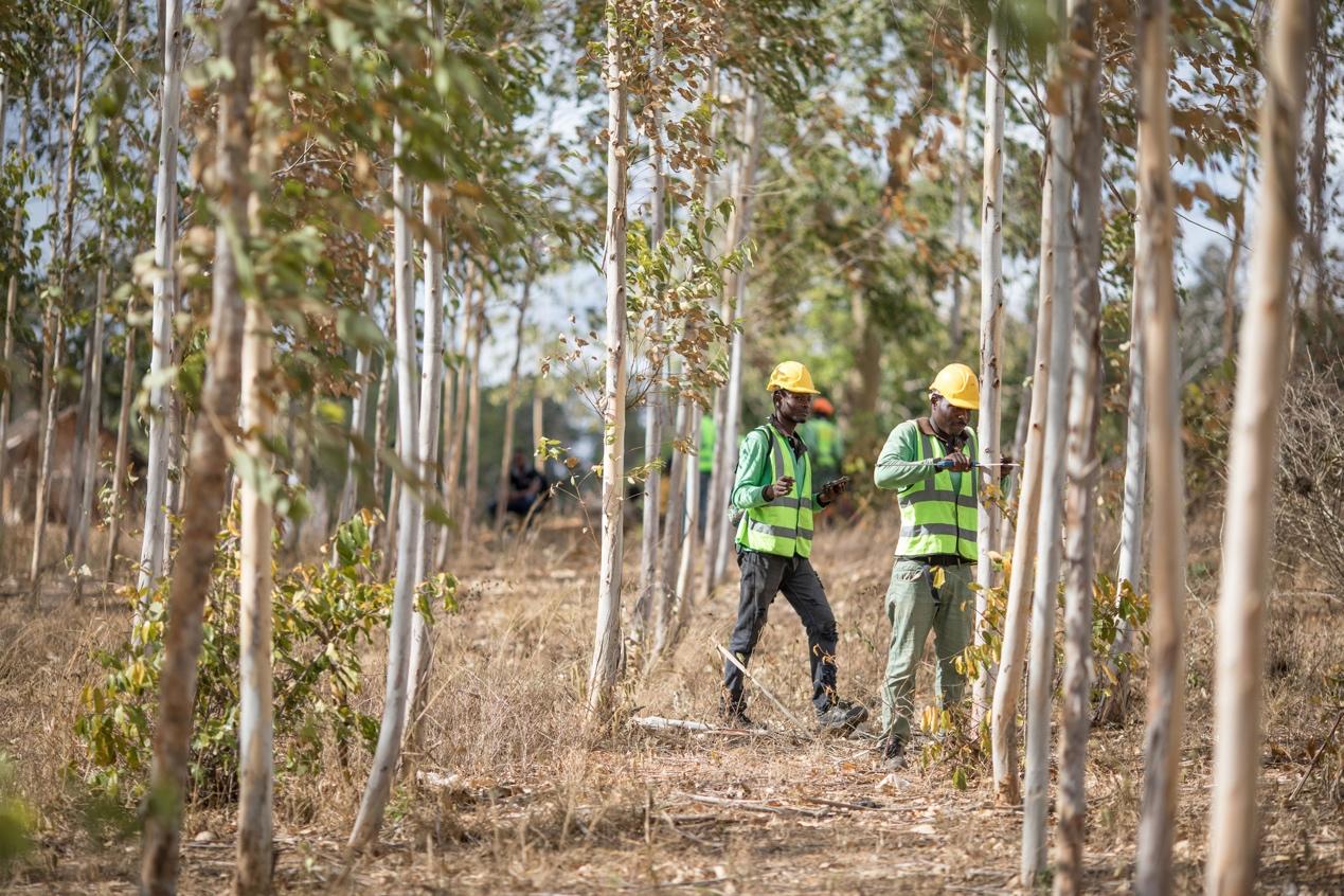 苹果与合作伙伴发起碳清除计划 投资2亿美金用于森林保护