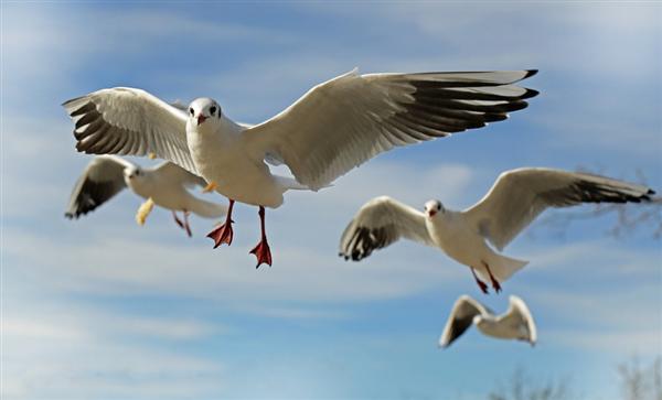 鸟类为何能利用地球磁场导航?科学家终于破解