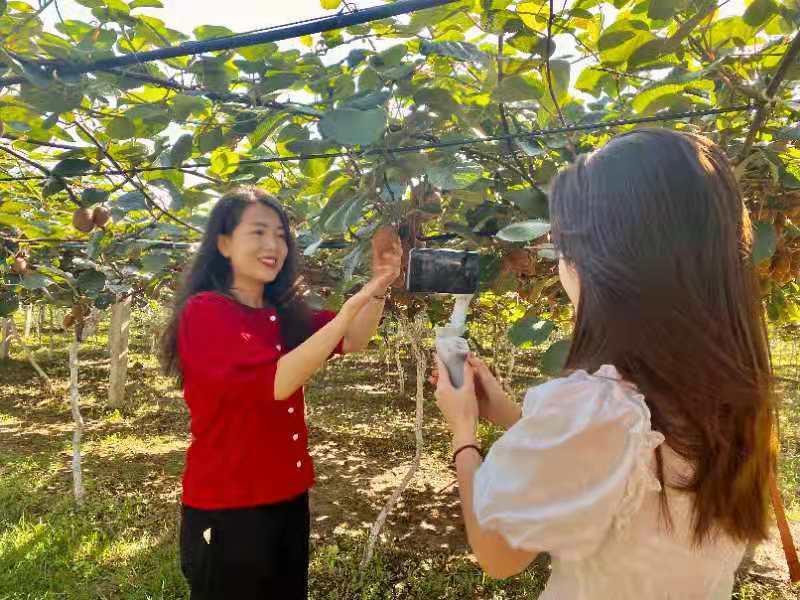 临潼区:果园里面开直播 线上举办采摘节