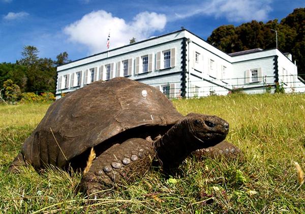 """189岁高龄巨龟成为最老陆生动物:""""好色""""程度让专家唏嘘"""