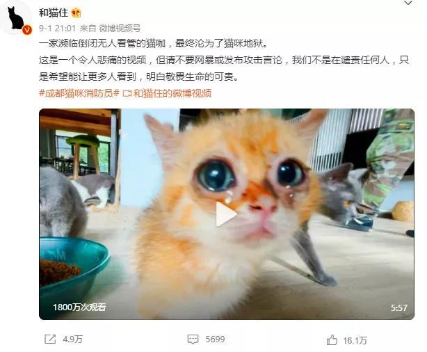 3000亿元宠物经济的背后乱象:猫的子宫、身体与生命,全都是钱