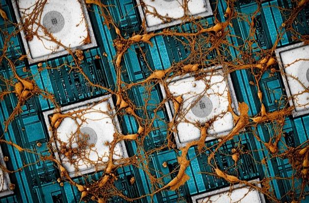 """三星哈佛大学发黑科技论文:拟用存储芯片""""下载""""复制人类大脑"""